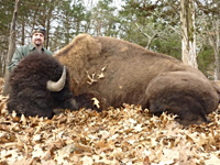 Hunting Buffalo in the Winter