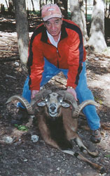 Corsican Ram Hunting at High Adventure Ranch