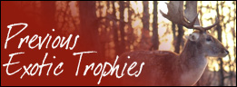 Exotic Trophies