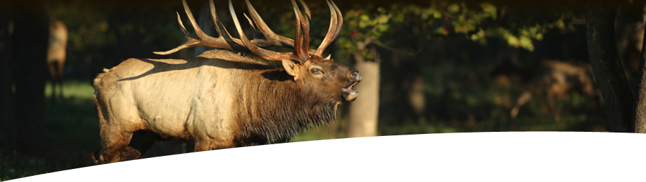 Guided Trophy Elk Hunts High Adventure Elk Hunting Ranch