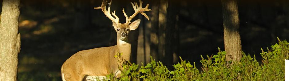 Elk Hunt Season Starts September 1 Fall Elk Specials High Adventure Ranch
