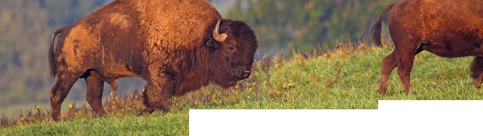 High Adventure Hunting Ranch | Trophy Deer, Elk Hunts, Wild